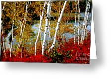 Autumn Birch Lake View Greeting Card