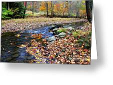 Autumn Birch River Greeting Card