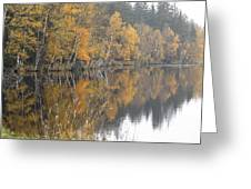 Autumn Birches On The Shore Of Lake Greeting Card