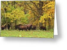 Autumn Bison Greeting Card