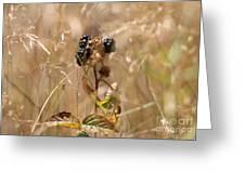 Autumn Blackberries Greeting Card