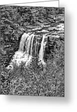 Autumn Blackwater Falls Bw Greeting Card