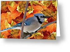 Autumn Blue Jay Greeting Card by Debra     Vatalaro