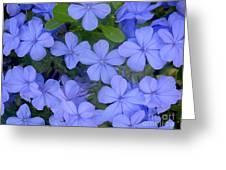 Autumn Blues Greeting Card
