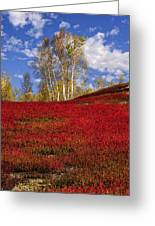 Autumn Birches And Barrens Greeting Card