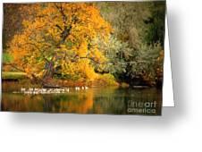 Autumn Calm Greeting Card