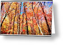 Autumn Canopy Greeting Card