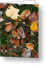 Autumn Carpet 001 Greeting Card