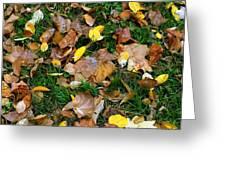 Autumn Carpet 002 Greeting Card