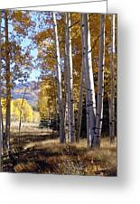 Autumn Chama New Mexico Greeting Card