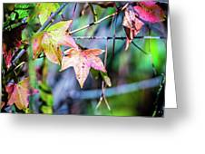 Autumn Color Changing Leaves On A Tree Branch Greeting Card