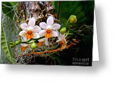 Autumn Colored Orchids Greeting Card