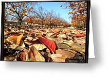 Autumn Colors 04 Greeting Card