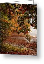 Autumn Colors 37 Greeting Card
