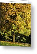 Autumn Colors 8 Greeting Card