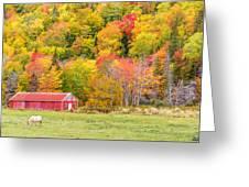 Autumn Colors Near Lake Ainslie  Greeting Card