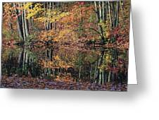 Autumn Colors Reflect Greeting Card