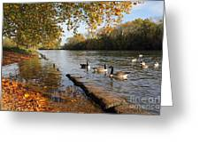 Autumn Colours At Sunbury On Thames Surrey Uk Greeting Card