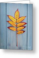 Autumn Colours On Blue Greeting Card