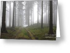 Autumn Coniferous Forest In The Morning Mist Greeting Card