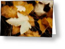 Autumn Dew Greeting Card
