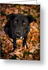 Autumn Dog Greeting Card by Adam Romanowicz