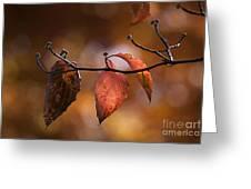 Autumn Dogwood 20121020_11 Greeting Card