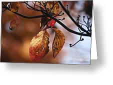 Autumn Dogwood 20121020_13 Greeting Card