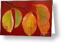 Autumn Dogwood Leaves On Red Greeting Card