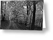 Autumn Drive Bnw Greeting Card