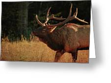 Autumn Elk In Cataloochee Valley Textured Greeting Card