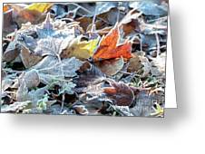 Autumn Ends, Winter Begins 3 Greeting Card