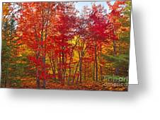 Autumn Experience Greeting Card