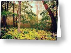 Autumn Fall Colors - Brilliant Ferns In The Blue Ridge Ap Greeting Card