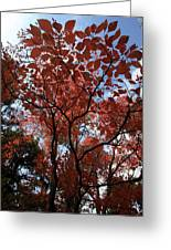 Autumn Fan Greeting Card