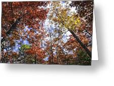 Autumn Forest Canopy Greeting Card