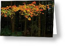 Autumn Forest Leaves Greeting Card