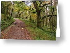 Autumn Forest Path - Greeting Card