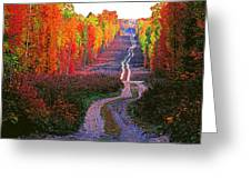 Autumn Forest Track Greeting Card