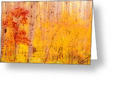 Autumn Forest Wbirch Trees Canada Greeting Card