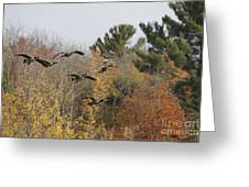 Autumn Geese Greeting Card