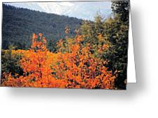 Autumn Glory And Mountain Cathedral Greeting Card