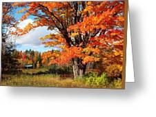 Autumn Glory Greeting Card by Gigi Dequanne