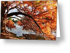 Autumn Glow Greeting Card by Nicola Butt