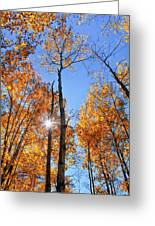 Autumn Gold Sunburst Greeting Card