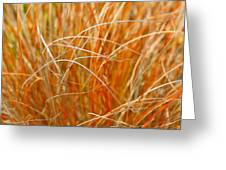 Autumn Grass Abstract Greeting Card