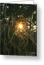 Autumn Grasses In The Morning Greeting Card