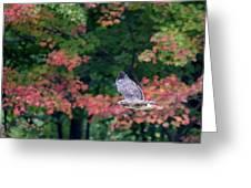 Autumn Hawk Square Greeting Card
