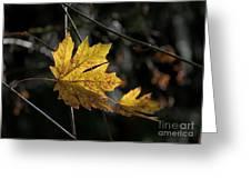 Autumn Highlight Greeting Card