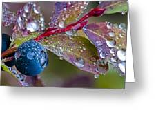 autumn Huckleberry berry and leaves macro in autumn Greeting Card